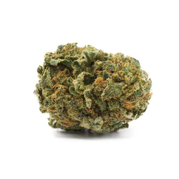 jack herer marijuana legale torino