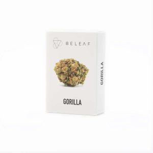 gorilla beleaf marijuana legale torino