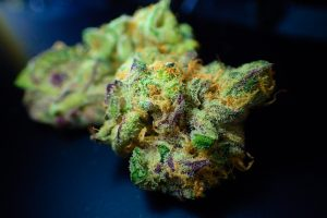 Marijuana legale a Torino