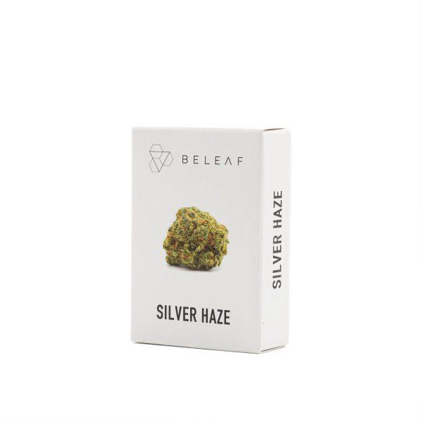 silver haze marijuana legale torino